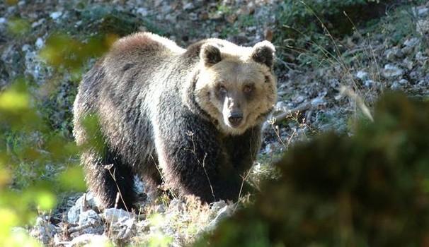 orso-mario
