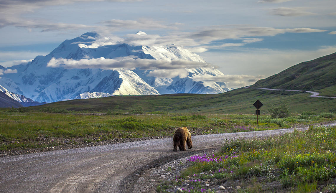 Driving in Denali National Park can create some very beautiful scenes. This grizzly bear was walking down the road in the late evening when Mount McKinley was in full view.