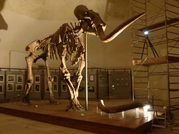 mammut meridionale